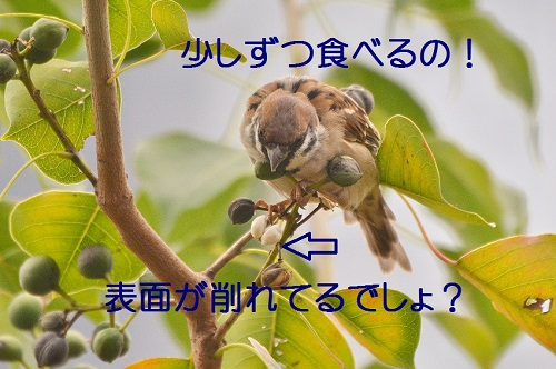 100_2016102800541196e.jpg