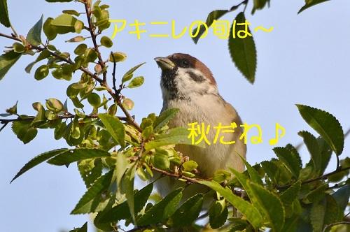 100_201610291949546ae.jpg