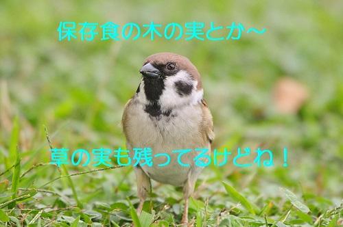 100_201611020233363ce.jpg