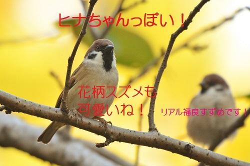 100_2016110819301552f.jpg