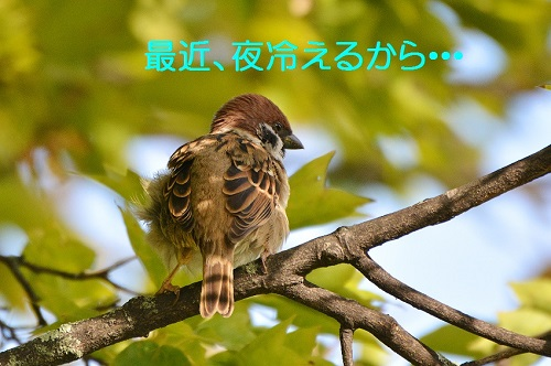 110_201610311935401ce.jpg