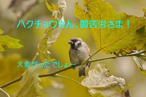 110_2016110718371230a.jpg