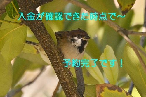 120_20161105175952120.jpg