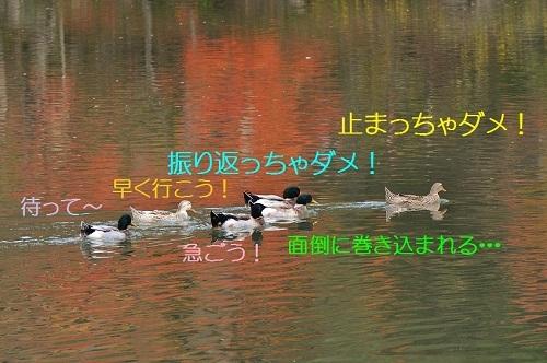 120_20161107183714196.jpg