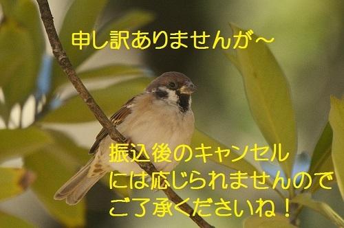 150_20161105175957ca6.jpg