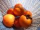 焼酎漬けした柿