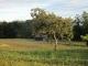 前の家の柿