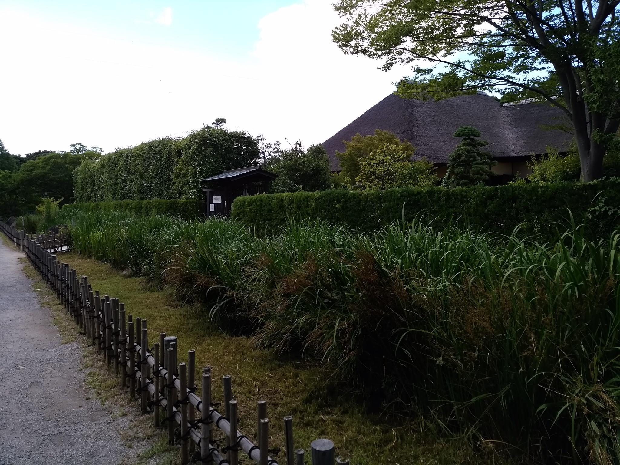 実籾公園20160724Ⅱ