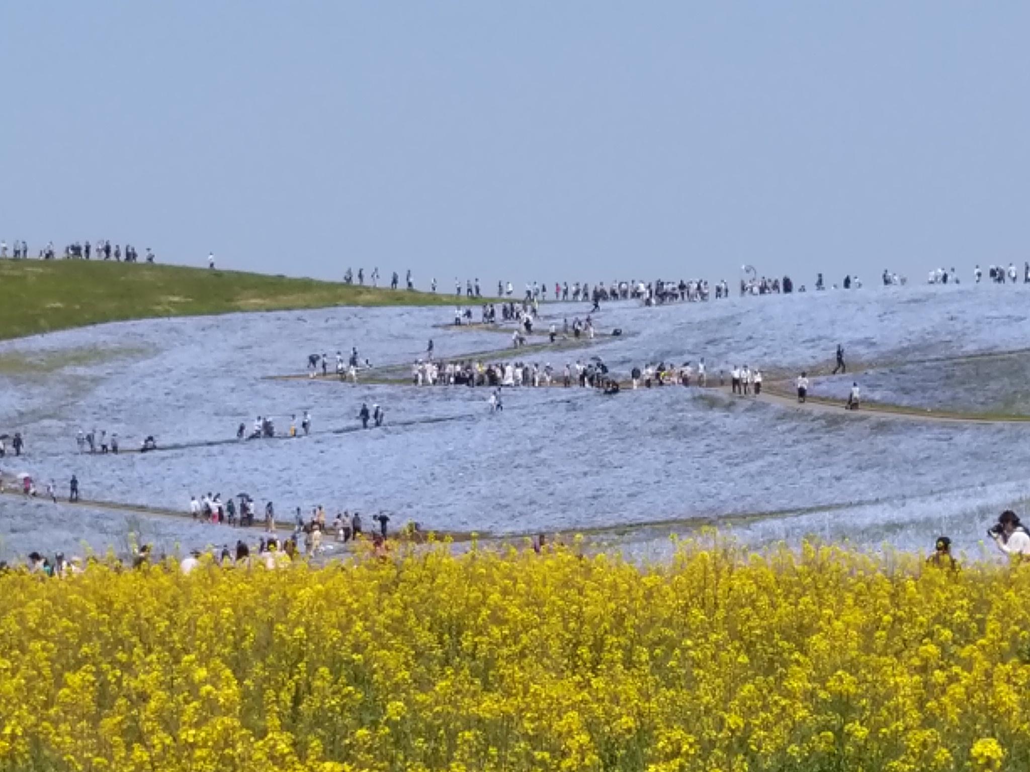 ひたち海浜公園3