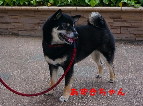 柴柴会 (5)