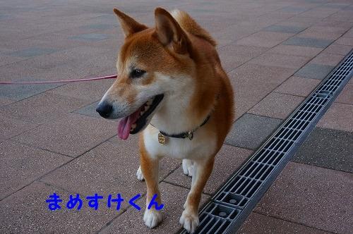 柴柴会 (13)