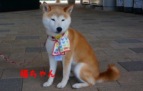 柴柴会 (14)