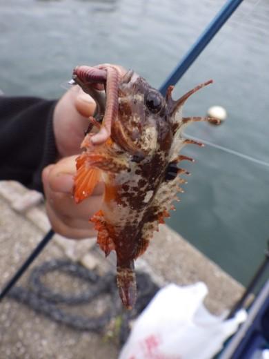 三浦港釣り (31)