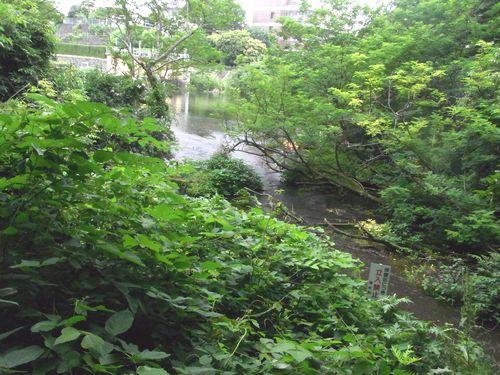 柿田川15