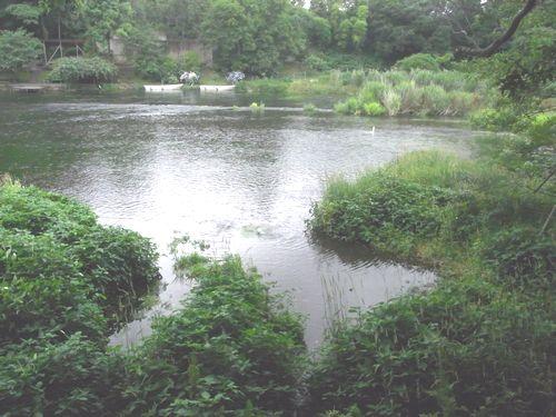 柿田川18