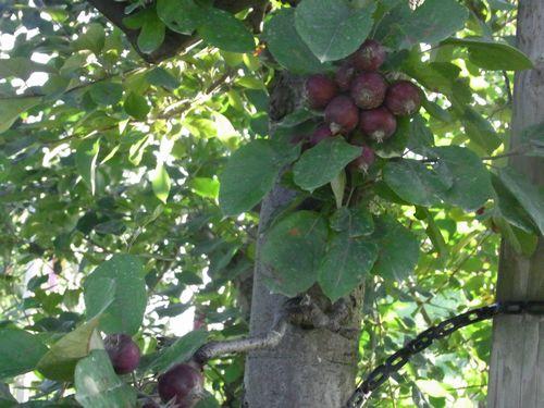 りんご公園15