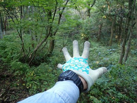 お気に入りの森