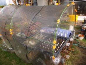 簡易ビニールハウス~側面を閉じれば、冬でもかなり高温室になります。2016.10.20