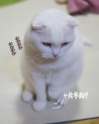 kataasのコピー