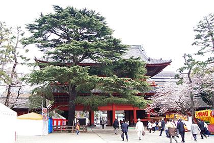 160330増上寺グラント松②