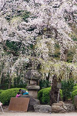 160330東京都増上寺グラン