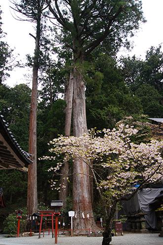 160427日光二荒山神社⑨