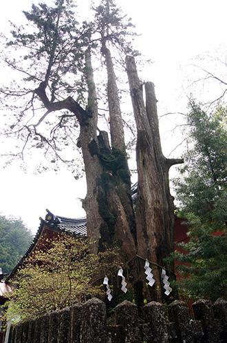 160427日光二荒山神社⑪