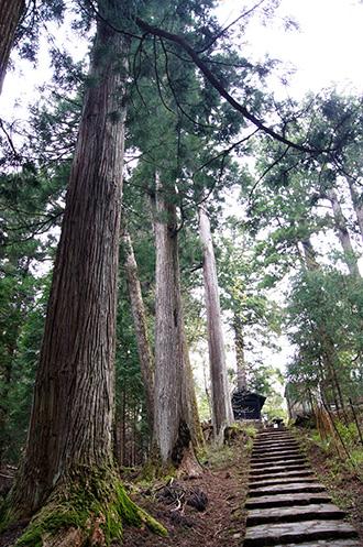 160427日光市行者堂の杉⑫