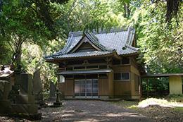 160508正福寺スダジイ⑥