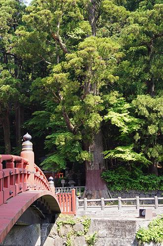 160524栃木県日光太郎杉①