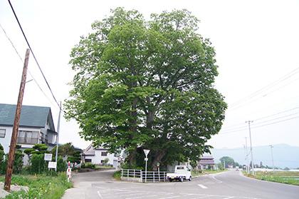 160524永田のツキノキ①