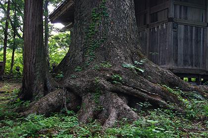 160524雷電神社モミ④