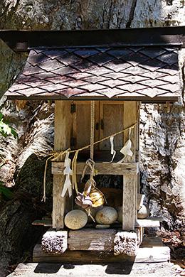160603鹿島神社のトチ④
