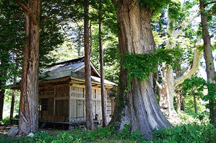 160603井桁鹿島神社ニレ④