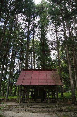 160603熊野堂神社大銀杏⑦