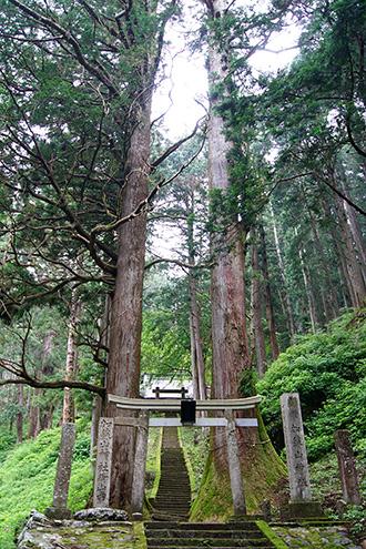 160607加蘇山神社の大杉①