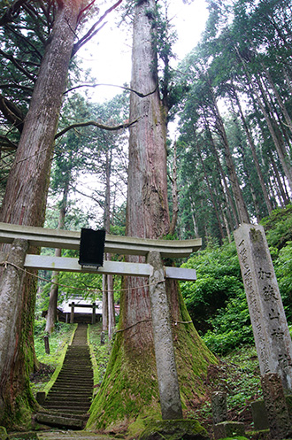 160607加蘇山神社の大杉②