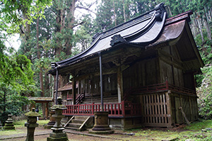 160607加蘇山神社の大杉⑦