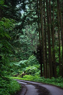 160607加蘇山神社の大杉⑧