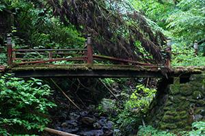 160607加蘇山神社の大杉⑨