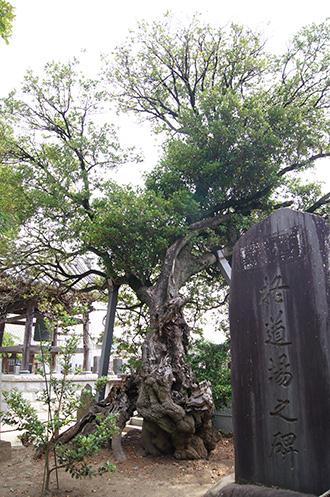 160612光明寺の柊③