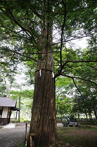160906忍草浅間神社イチイ③