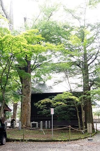 160906忍草浅間神社イチイ⑥