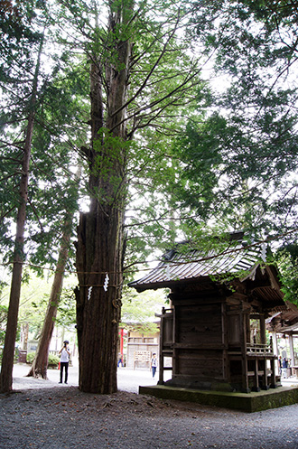 160906忍草浅間神社イチイ⑦