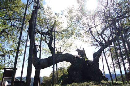 160927山梨 山高神代桜①