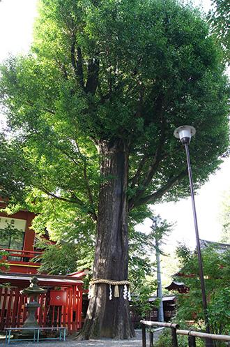 161002秩父神社の大銀杏②