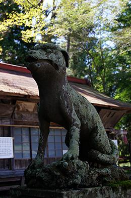 161002椋神社の夫婦椚⑤