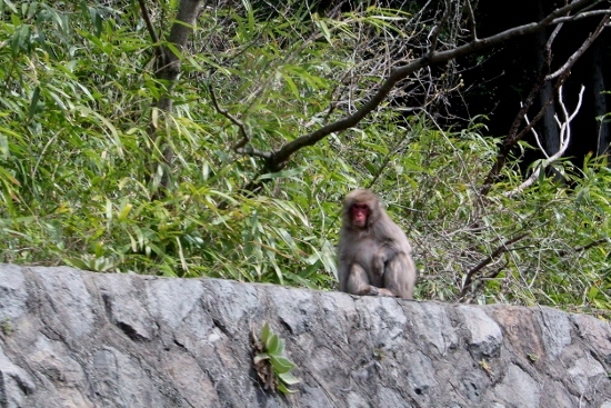 ⑩野猿 (550x367)