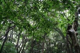 160710_10樹木