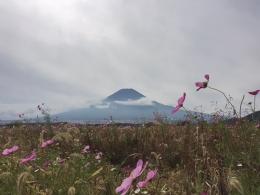 161020_10富士山と秋桜